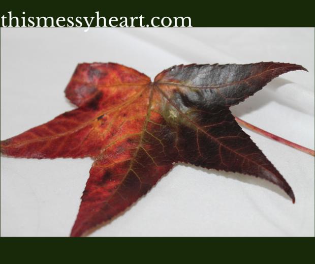 Leaf-Day 9